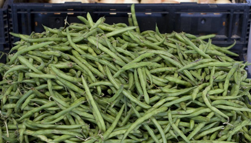 Vegetables That Grow Well In Central Florida Garden Guides
