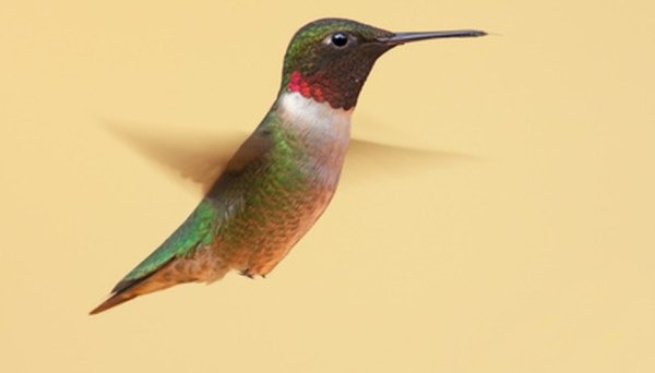 Plants to Attract Hummingbirds in Florida | Garden Guides