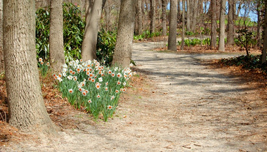 Wooded Landscaping Ideas   Garden Guides on Wooded Backyard Ideas id=98270