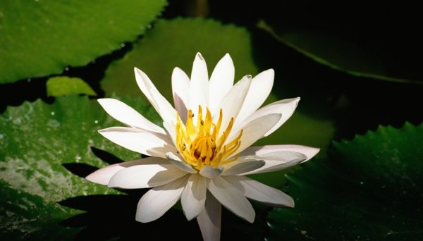 Buddhist Lotus Flower Crafts for Children | Our Pastimes