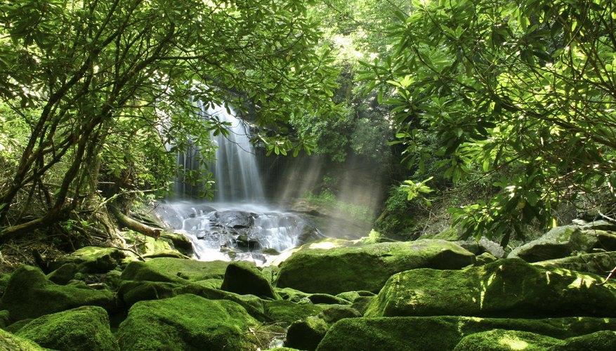 Tropical Rainforest Biome Human Impact