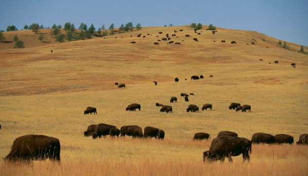 Great Plains of North America Animals & Plants | Sciencing