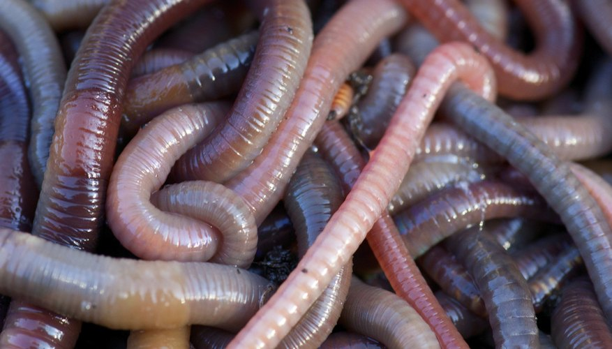 You can start an auditing business with a minimal investment, often by working from your home on nights and weekends until you build a customer base. Earthworm Characteristics   Sciencing