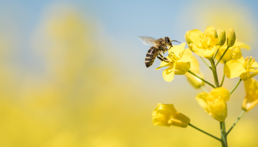 How Do Flowers   Bees Help Each Other    Sciencing Once they reach adulthood  most living things take care of themselves and  sometimes their offspring  However  certain plants and animals have  developed
