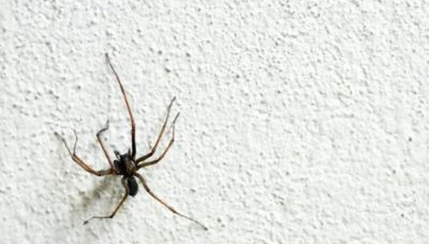 House Spiders Northern Pennsylvania