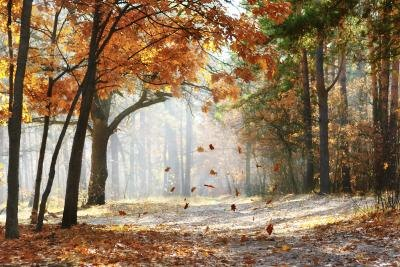 Image result for trees leaves falling