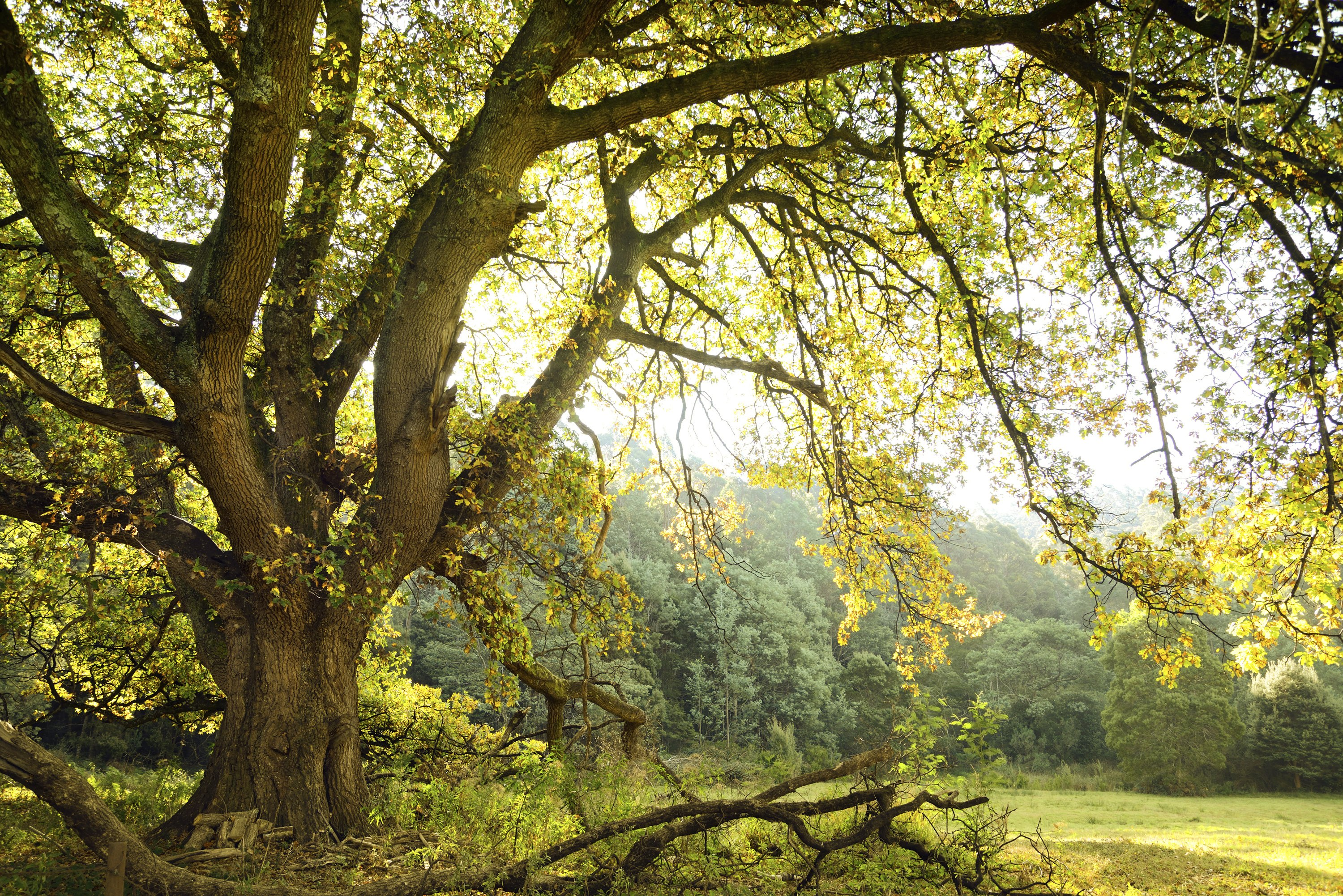 What Types Of Trees Are Hardwoods With Pictures