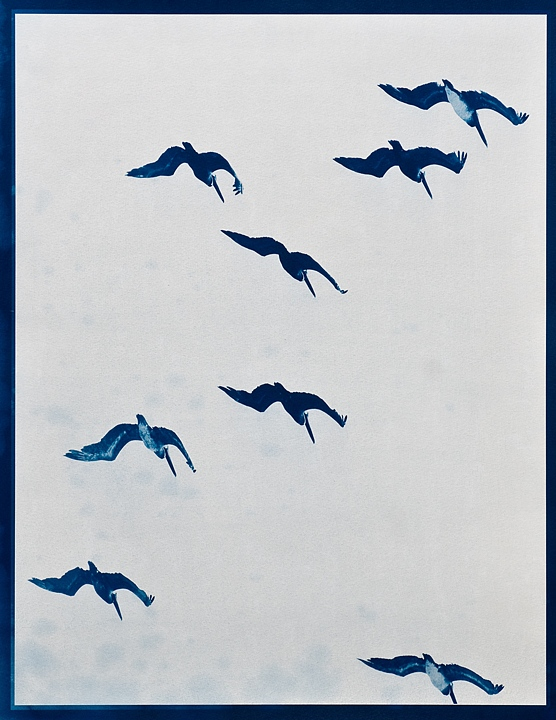birds hang motionless