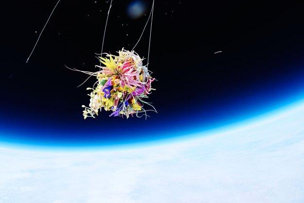 Exobiotanica – Botanical Space Flight