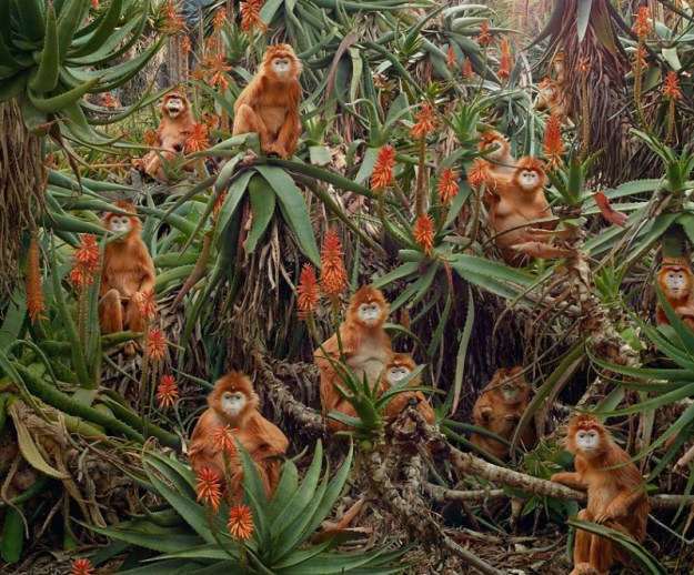 Apocalyptic Animal Kingdom Of Simen Johan