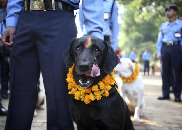 Nepal's Festival To Celebrate Dogs 3