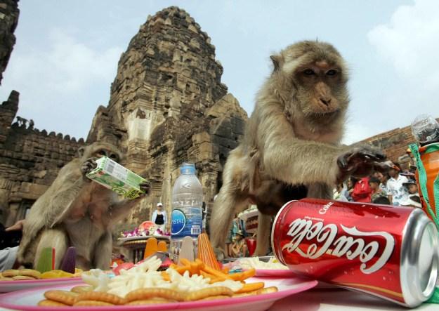 The Monkey Buffet Festival In Thailand 2