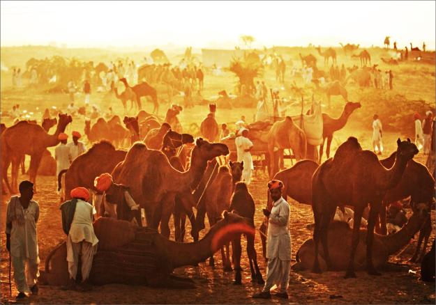 The Pushkar Camel Fair In Rajasthan, India 1