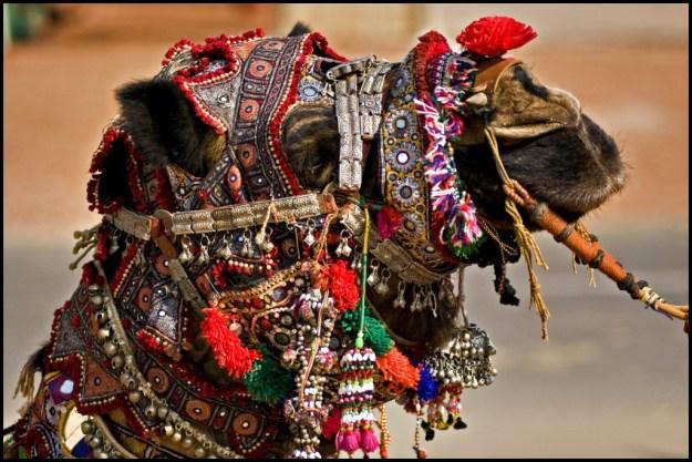 The Pushkar Camel Fair In Rajasthan, India 6