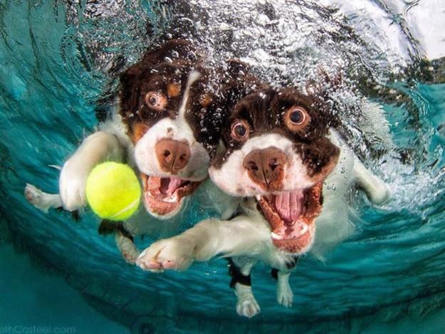 Underwater Dogs By Seth Casteel 10