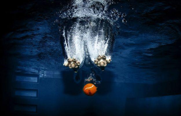 Underwater Dogs By Seth Casteel 12