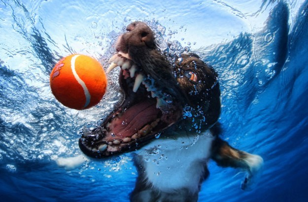 Underwater Dogs By Seth Casteel 17