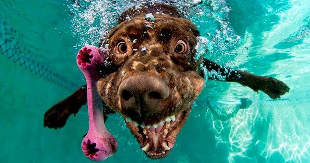 Underwater Dogs By Seth Casteel 4