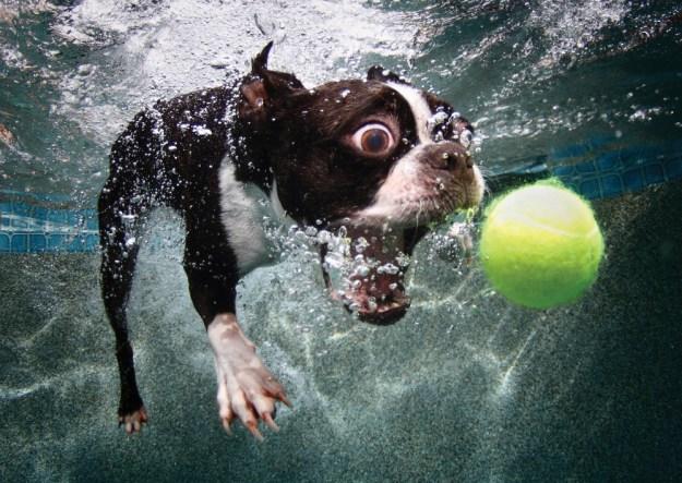Underwater Dogs By Seth Casteel 6