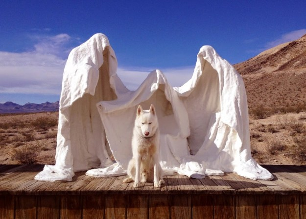 Alone With 53 Thousand Followers- Incredible Adventures Of John Stortz And His Dog 8
