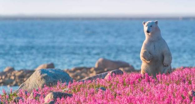 The Cutest Polar Bear You've Ever Seen! Boom! 10