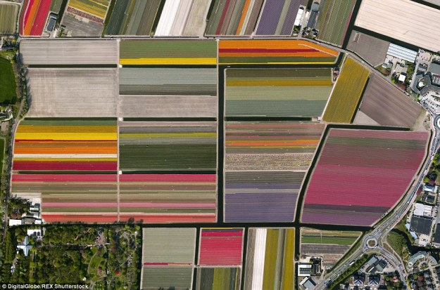 13. Tulip fields, Lisse, Netherlands