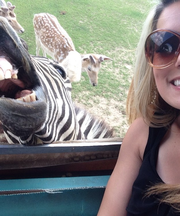 Snapping Selfies with Wild Animals Is a New Trend 11