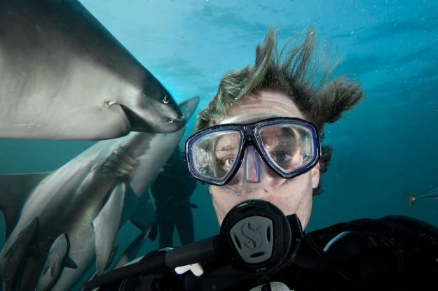 Snapping Selfies with Wild Animals Is a New Trend 13