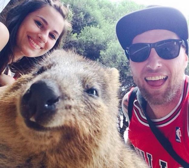 Snapping Selfies with Wild Animals Is a New Trend 16