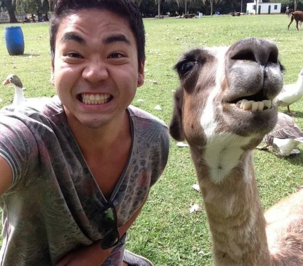 Snapping Selfies with Wild Animals Is a New Trend 9