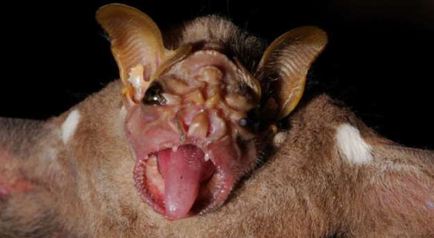 15 of The Most Terrifying Animals You Never Knew About 31