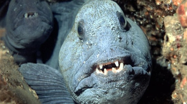 15 of The Most Terrifying Animals You Never Knew About 9