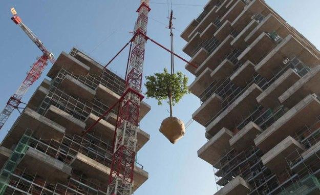 cedar_trees_tower_07