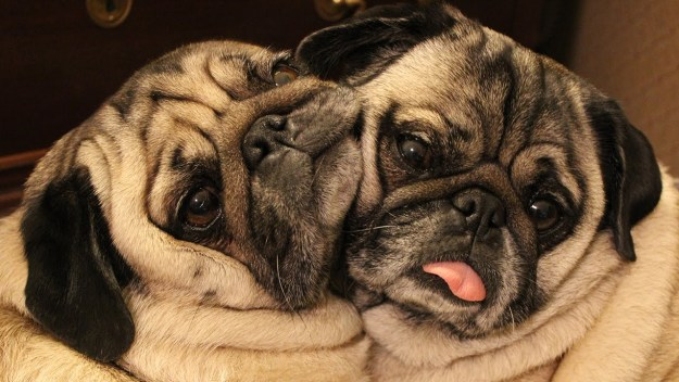 most-popular-internet-dogs-12