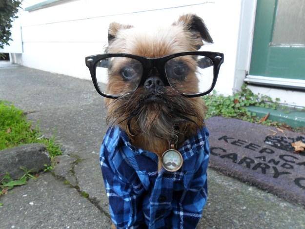 most-popular-internet-dogs-18