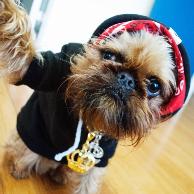 most-popular-internet-dogs-19
