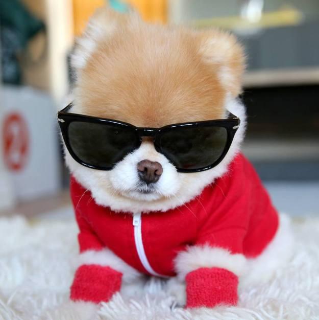 most-popular-internet-dogs-22