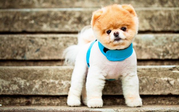 most-popular-internet-dogs-24
