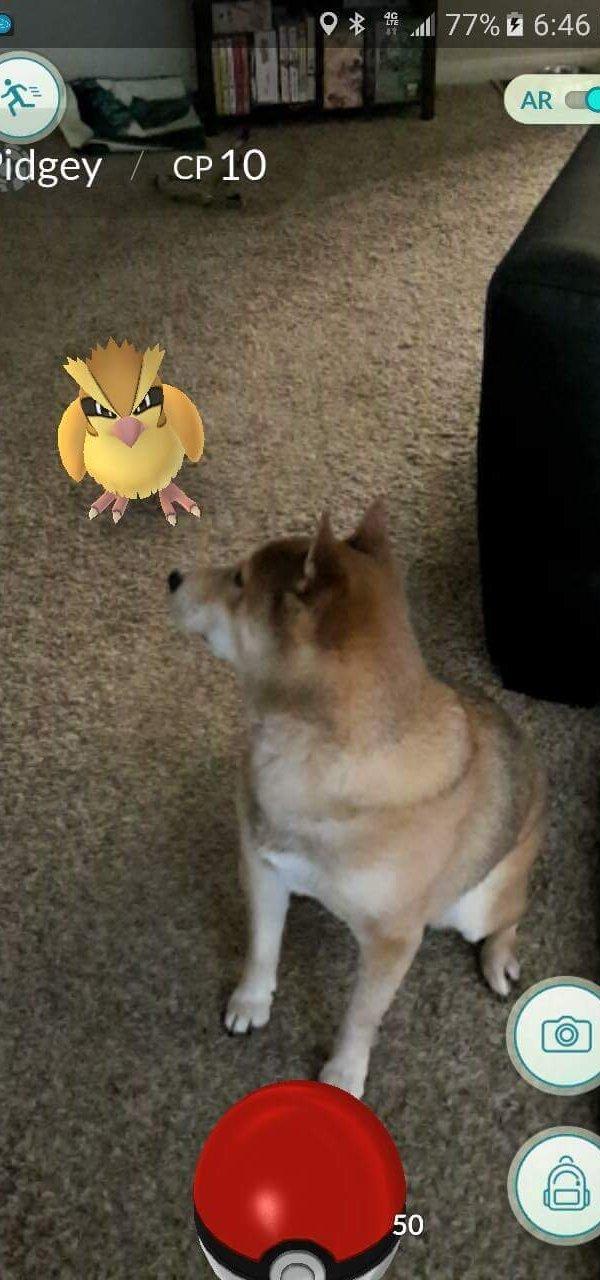 funniest-pokemon-go-memes-16