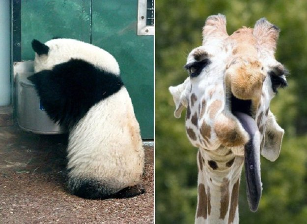 poor-animals-that-had-too-much-to-drink-last-night-05