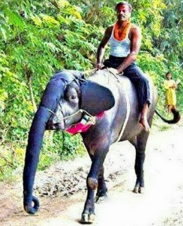 weird-things-that-can-happen-only-in-india-02