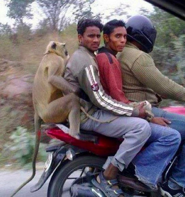 weird-things-that-can-happen-only-in-india-19