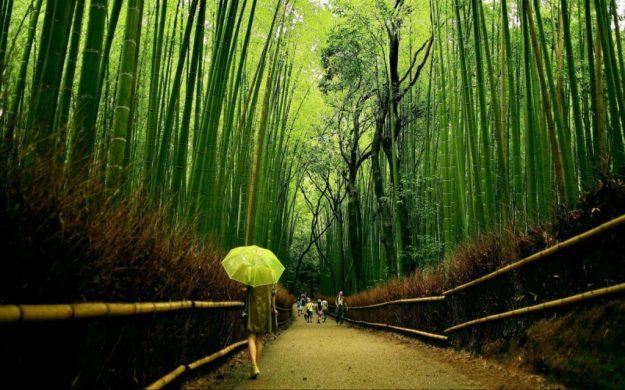 Бамбуковая роща Сагано   Киото – город, который стоит посетить хотя бы раз   Brain Berries
