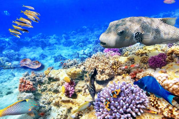 Коралловое море | Чудеса природы: самые большие моря на планете | Brain Berries