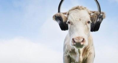 Seven Sensational Facts About Sound | Brain Berries