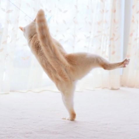 Japanese Dancing Cat #16 | Brain Berries