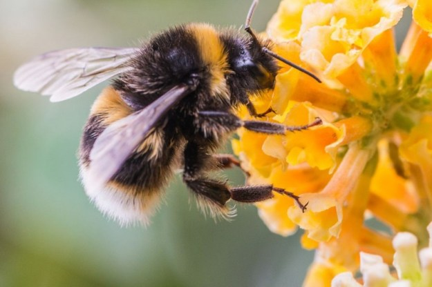 Bees | The Deadliest Insects In The World | Brain Berries
