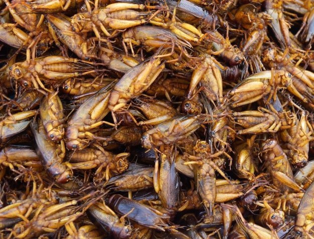 Кузнечики | 6 насекомых, которые в будущем могут заменить нам еду | Brain Berries