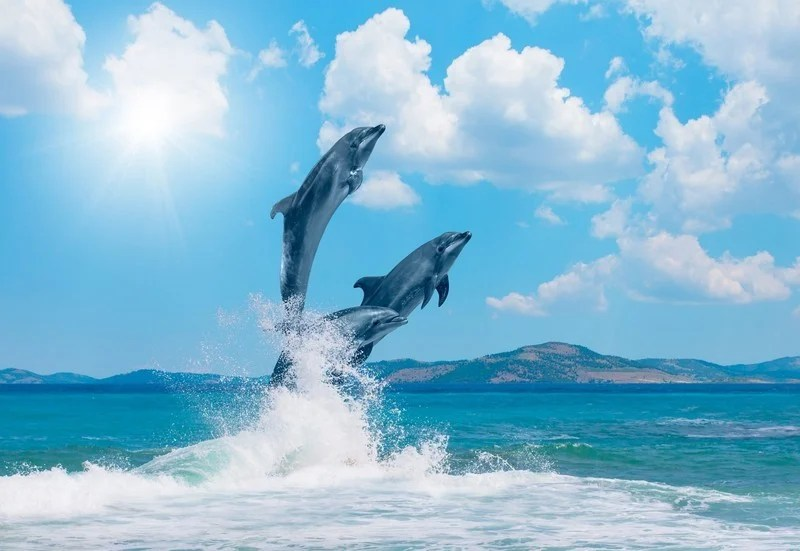 Dolphins Hunt In Packs | 6 Reasons Sharks Are Afraid of Dolphins | Brain Berries