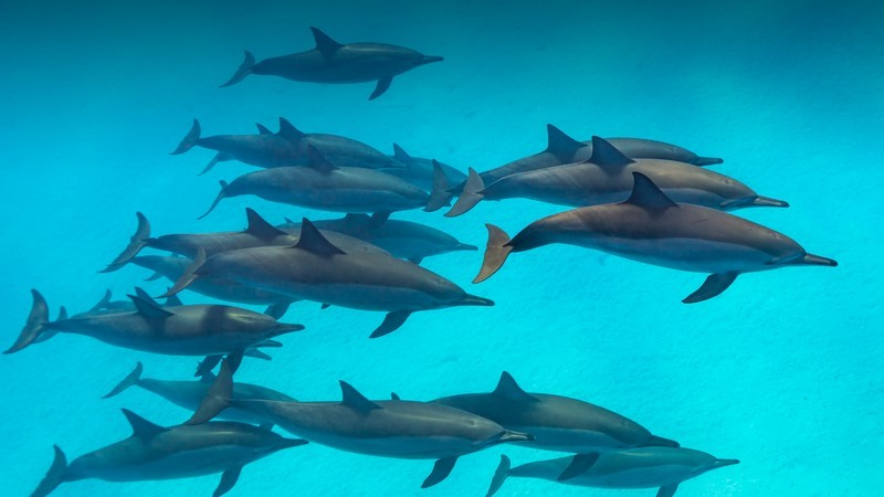 Dolphins Are Faster | 6 Reasons Sharks Are Afraid of Dolphins | Brain Berries
